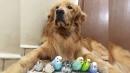 """""""우리는 한 가족"""" 새 8마리·햄스터와 사는 개"""
