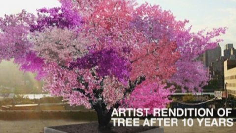 나무 한 그루에 40가지 과일 '주렁주렁'