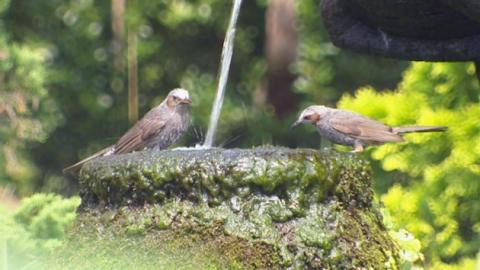 물가 찾아 피서 즐기는 새들