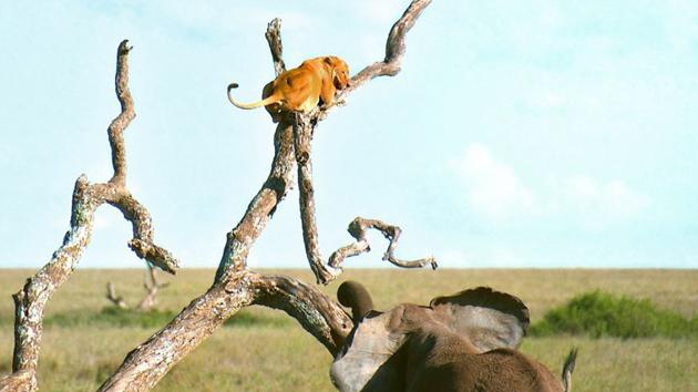 사자도 벌벌 떠는 진짜 '초원의 왕'은?