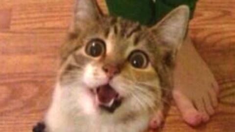 """""""이렇게 찍으면 되냥"""" 고양이들의 셀카 본능"""