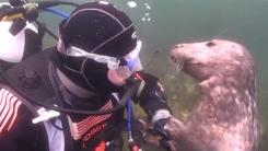 '우리 집에 왜 왔니?' 바다표범의 격한 환영