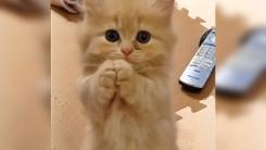 """'슈렉' 고양이 실제 모델? """"주인님, 배고파요"""""""