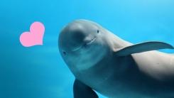 [한컷뉴스] '웃는 고래' 상괭이의 미소를 지켜주세요