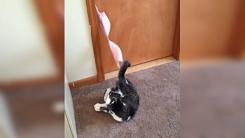 주인이 벗어둔 속옷에 걸린 고양이 '딱 걸렸다옹'