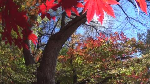 가을 오대산…농익은 단풍