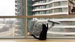 창문 닦는 아저씨와 고양이 '의외의 케미'
