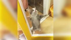 '내가 바로 개냥이다!'…고양이의 격한 애교