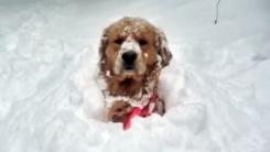 """눈과 강아지가 만나면 꿀조합 """"여기가 천국"""""""