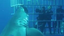 '등골이 오싹' 초대형 상어 공격 피한 다이버