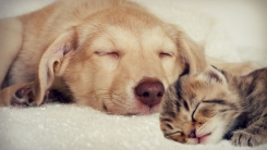 [한컷뉴스] '개와 고양이' 누가 더 나를 사랑할까?