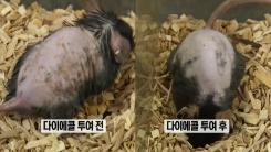 [뉴스 콕] 해조류 '감태'로 아토피 치료한다