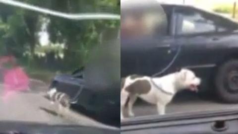 """""""산책 중이라고?"""" 개 매달고 달린 차주 학대 논란"""
