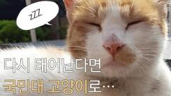 """[한컷뉴스] """"다시 태어난다면 국민대 고양이로…"""""""