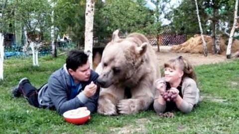 """""""우리집 귀염둥이"""" 137kg 곰과 동거하는 부부"""