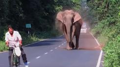자전거 탄 사람 무섭게 위협한 코끼리의 사정