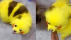 키우는 개 '피카츄'로 만든 포켓몬 팬 '학대 논란'