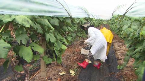 가을 재촉하는 비…가뭄·녹조 걱정 덜어준 단비