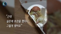 """[영상] """"먹으려고 산 달걀서 병아리가""""...'폭염'이 만든 새 식구"""