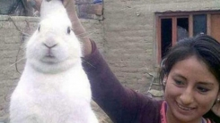 당근 대신 대마초 먹으러 집 나가는 토끼 적발