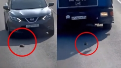 죽을뻔한 새끼 고양이 구해낸 운전자의 따뜻한 행동
