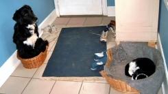 개의 보금자리를 뺏은 욕심 많은 고양이들