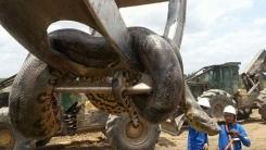 브라질에서 발견된 '10m 초대형 아나콘다'
