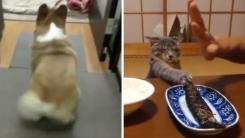 개 vs 고양이, 귀여움 대결 승자는?