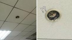 직원 감시하는 '고양이 CCTV'가 등장했다