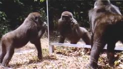 맹수가 우글대는 정글에 거울을 설치해보았다