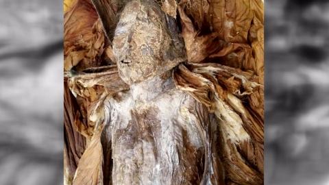 전남 곡성에서 379년 된 여성미라 발견