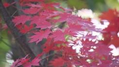 [날씨] 울긋불긋 붉게 물든 북한산...가을 산으로 떠나요