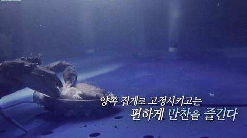 '삼시세끼' 마스코트 전복 '마이클' 잡아먹힌 순간