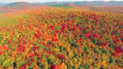 [영상] 가을 맞은 어느 공원의 풍경