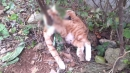 '고양이를 나무에'…끔찍한 고양이 연쇄살해 사건