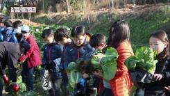 [좋은뉴스] 직접 기른 배추로 김장 봉사하는 초등생들