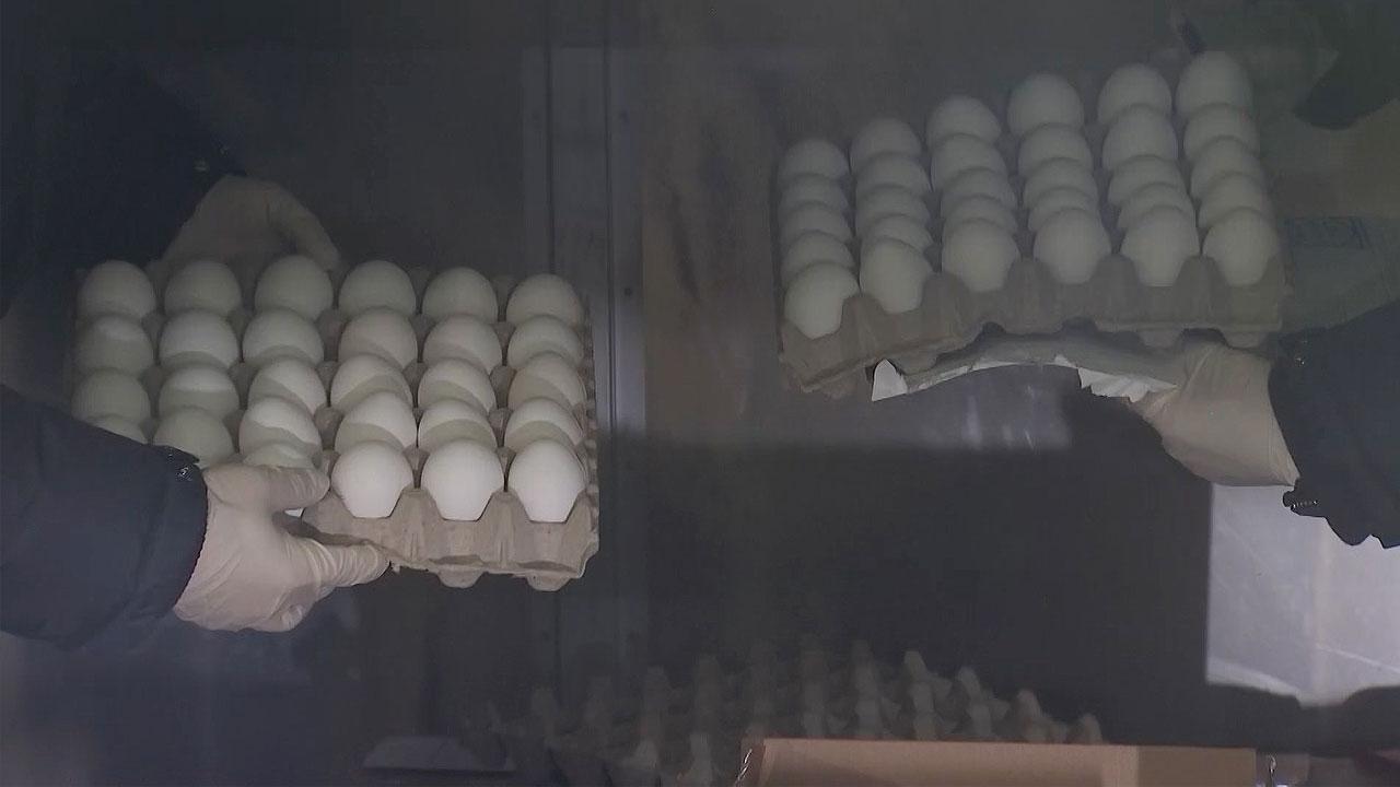 미국산 달걀 표본 도착...다음 주 본격 유통