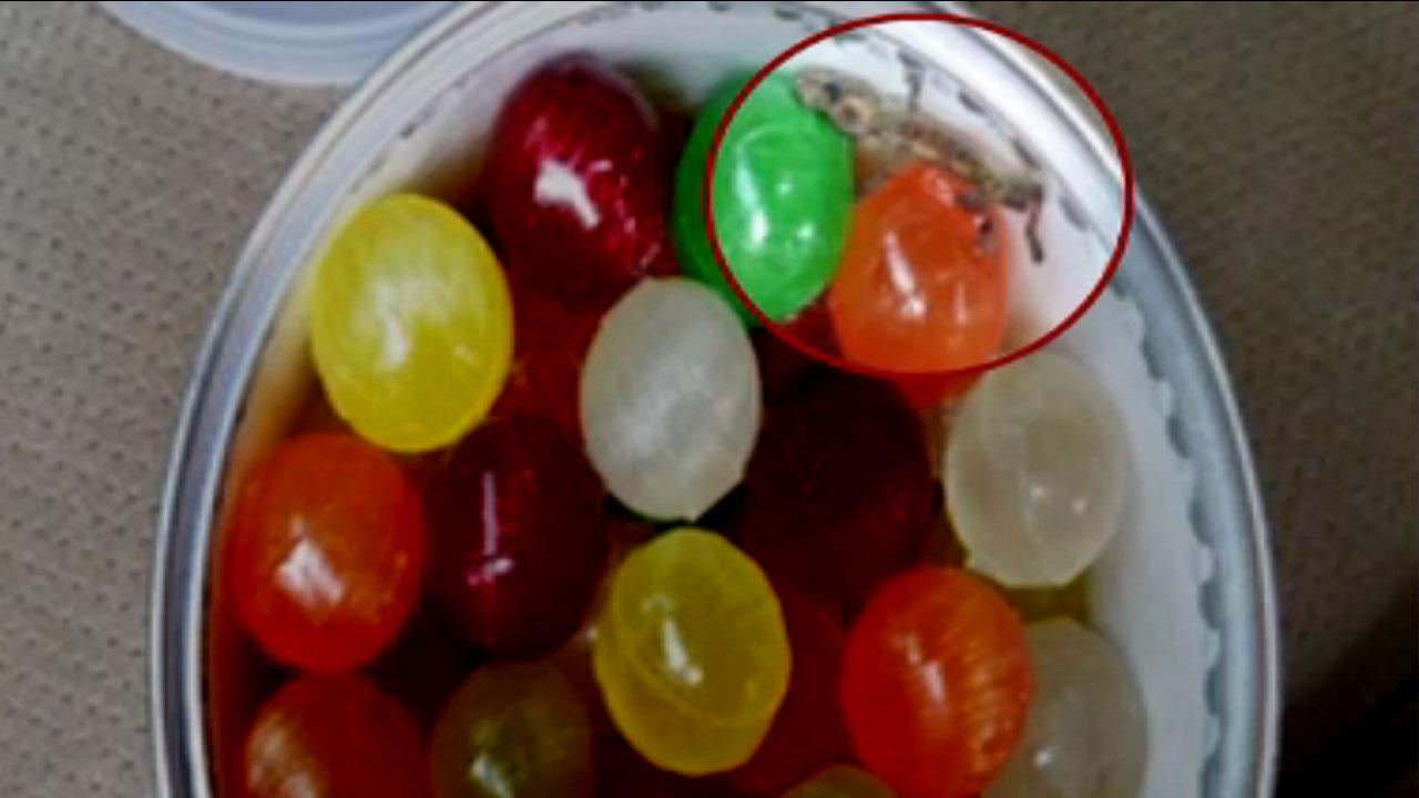 미국산 사탕에서 도마뱀 사체...판매 중단·회수