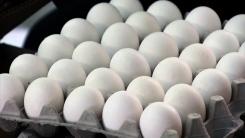 [취재N팩트] '특급 수송' 美 달걀, 이번 주말 본격 유통
