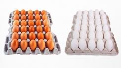 [뉴스인] 흰색과 갈색, 달걀색은 왜 다를까?