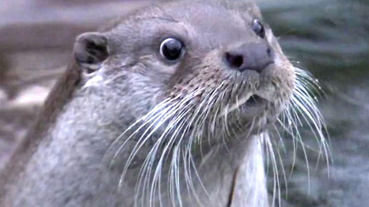 멸종위기 수달 발견...지금 한강 생태계는?