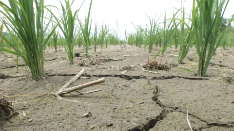 3년째 봄 가뭄…올해는 강원도만 '주의'