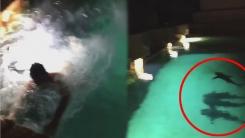상어가 득실대는 수영장에 빠진 남자의 운명