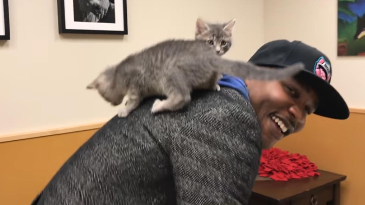 오직 고양이만을 노래하는 힙합 스웨그