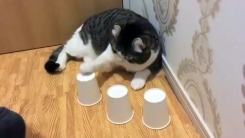 """""""너무 쉽다냥""""...'야바위' 정확히 맞추는 고양이"""