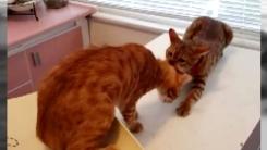 '친구야 내가 구해줄게'...고양이의 귀여운 착각