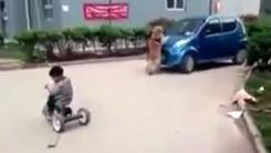 [영상] '접근 금지'...꼬마 주인 위해 온몸 던진 강아지