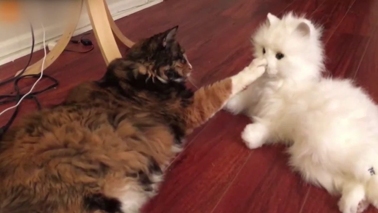 [영상] '나보다 더 진짜 같네'...로봇 고양이 본 반응은?
