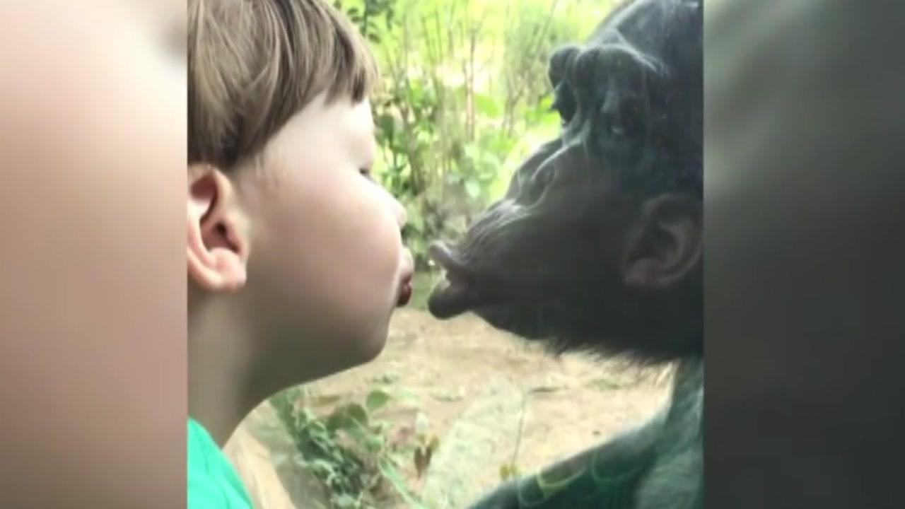 [영상] 소년과 침팬지의 훈훈한 우정