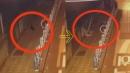 선거 벽보 훼손한 '길고양이'?…네티즌 반응은